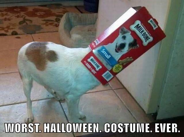 animals costume dogs halloween caption worst - 8575822848