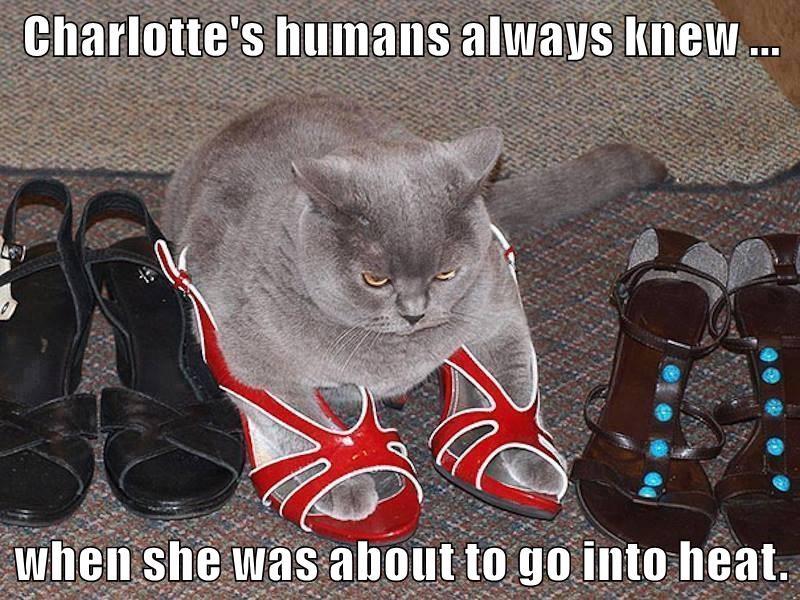 animals shoes Heat human female caption Cats funny - 8575845376