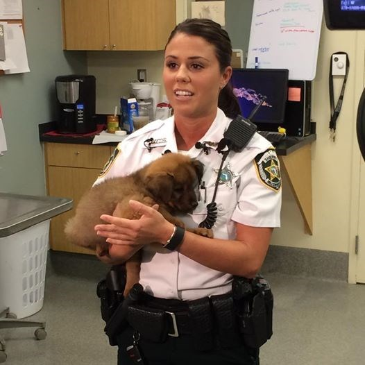 cute rescue dogs Kidnapped Puppy is Adopted by the Police Officer Who Saved Him