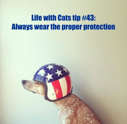 Life with Cats tip #43: Always wear the proper protection