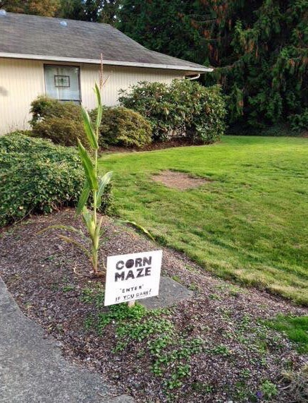 halloween memes corn maze sign