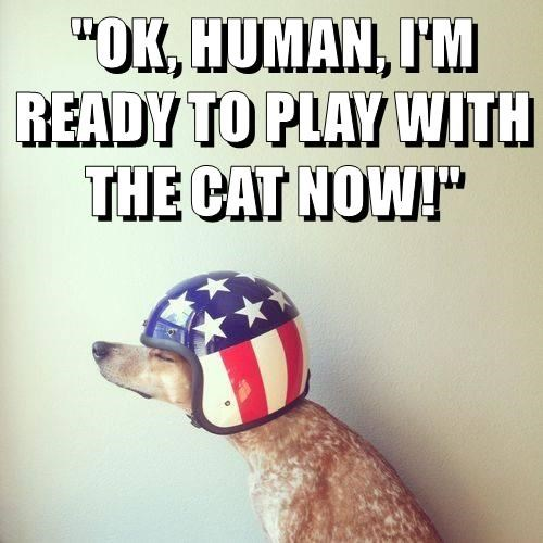 cat,dogs,helmet,ready,play,caption