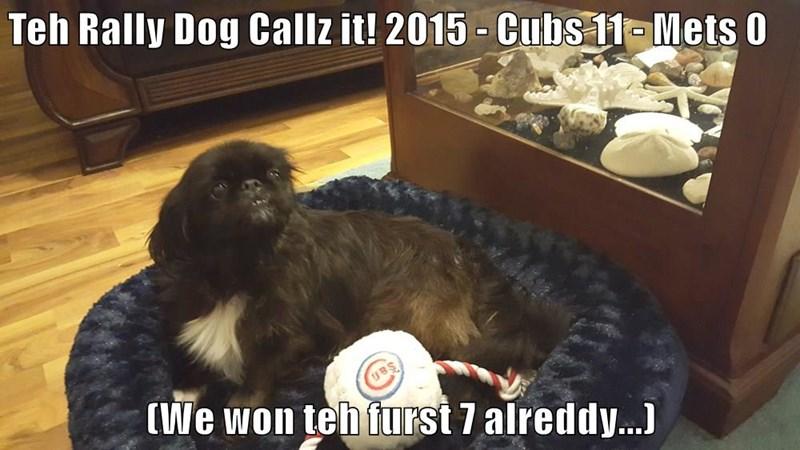 Teh Rally Dog Callz it! 2015 - Cubs 11 - Mets 0  (We won teh furst 7 alreddy...)