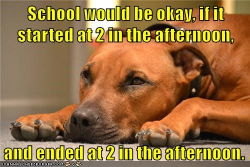 animals dogs time school caption funny - 8576269312