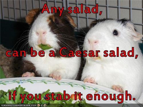 animals hamsters julius caesar funny animals salad - 8576271616