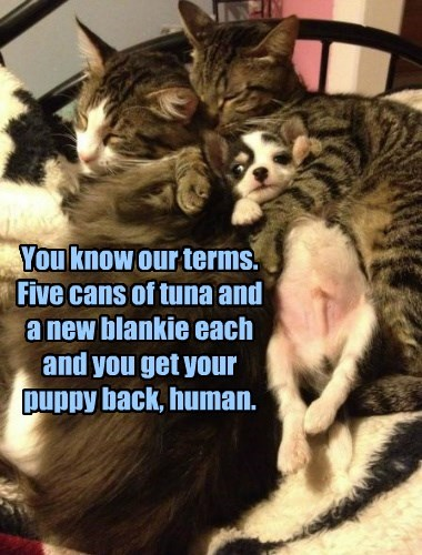 terms tuna puppy ransom caption Cats - 8576276736