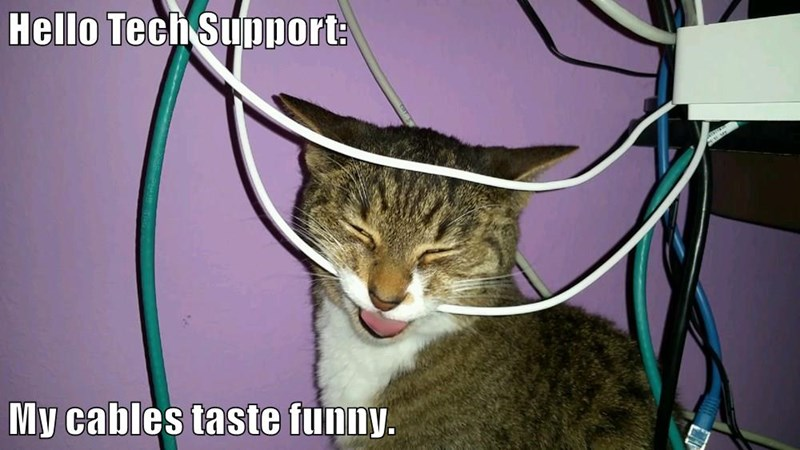 animals tech support cable caption Cats funny - 8576314880