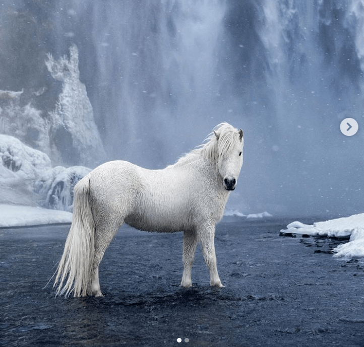 white horse next to a waterfall