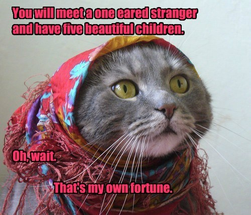 five cat stranger my meet caption fortune children - 8576550912