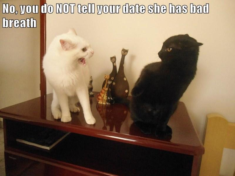 animals bad breath caption Cats funny - 8576646912