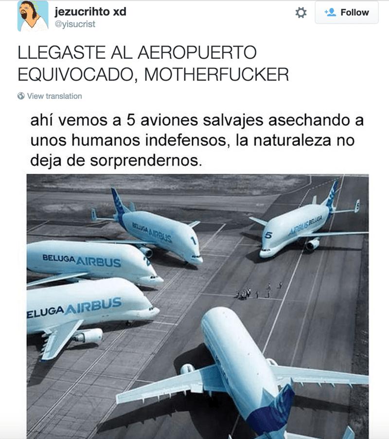 aviones en su naturaleza