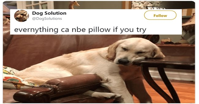 funny tweet by dog