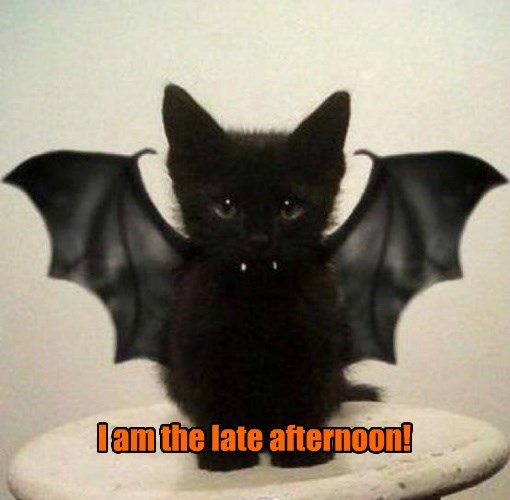 cat,afternoon,caption,late,i am,bat