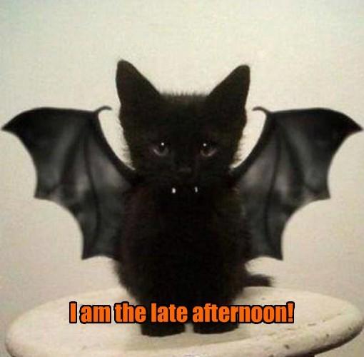 cat afternoon caption late i am bat - 8576785152