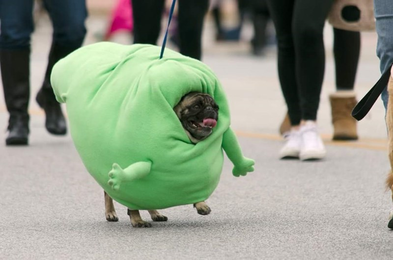 dogs slimer halloween He's Really Happy for a Ghost