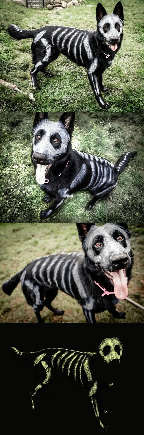 halloween memes skeleton painted dog