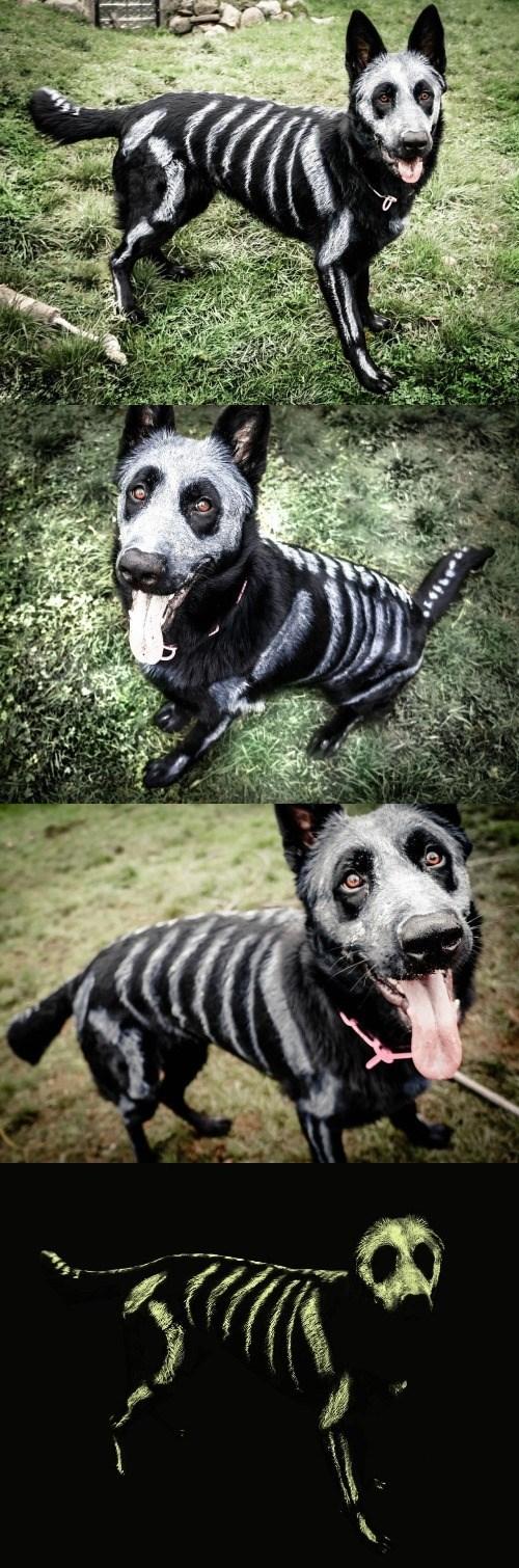 halloween memes skeleton painted dog