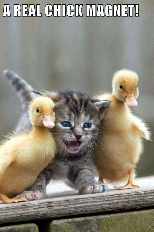 A REAL CHICK MAGNET!