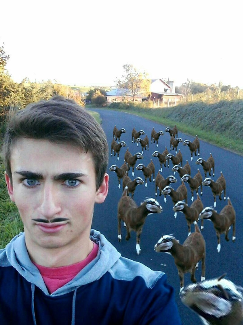 goats selfie photoshop