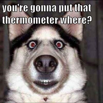 animals dogs put where thermometer caption