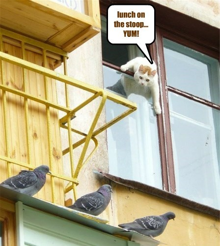 birds captions food Cats - 8577679616
