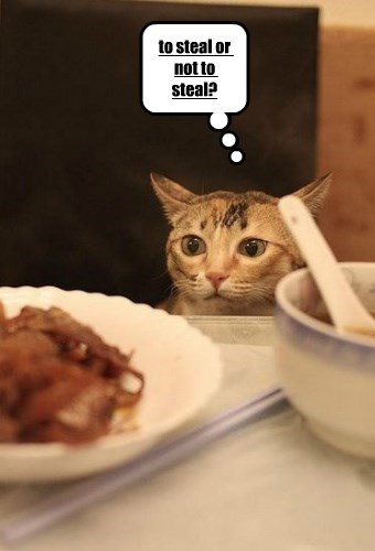 stealing food caption Cats funny indecisive - 8577680640