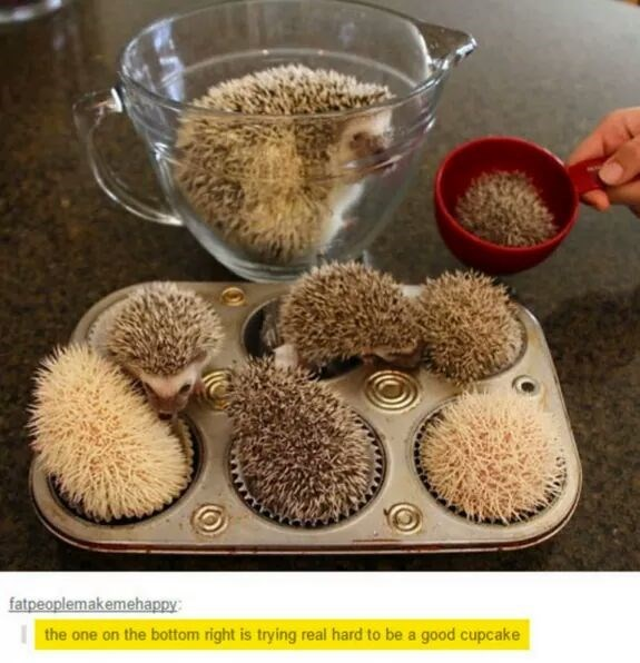 cute hedgehog image These Must Be No-Bake Cupcakes