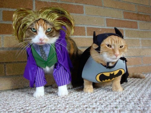 cats batman joker Even the Joker's Not Laughing
