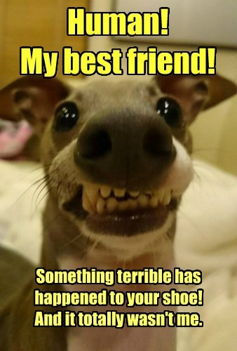something terrible dogs best friend human caption wasnt me shoe - 8577769472