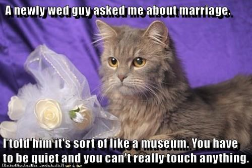 quiet,caption,Cats,funny,museum