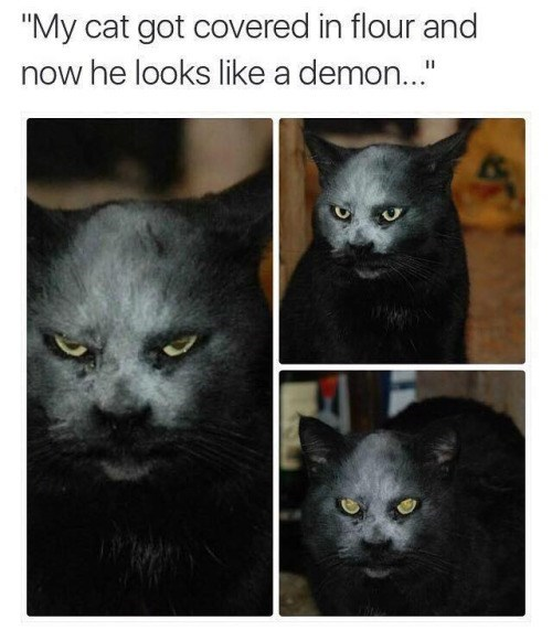 funny halloween cats It Only Took a Little Flour to Bring Out What We Always Knew Was the Truth