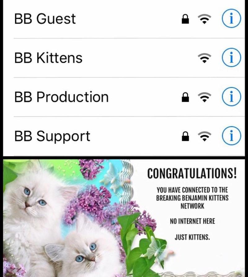 funny memes breaking benjamin wifi
