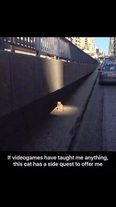 video game memes sidequest cat