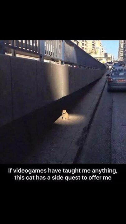 video game memes sidequest cat