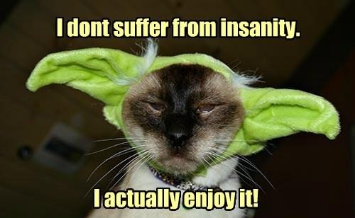 insanity caption Cats funny - 8577823488