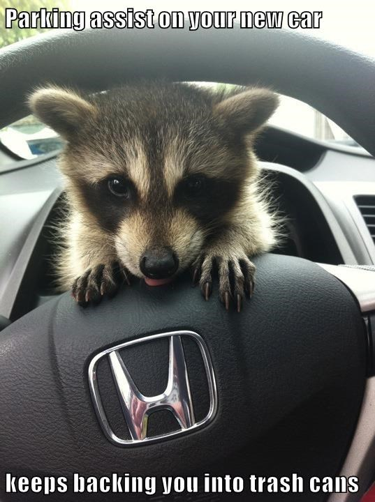 animals cars raccoons funny animals - 8577864960