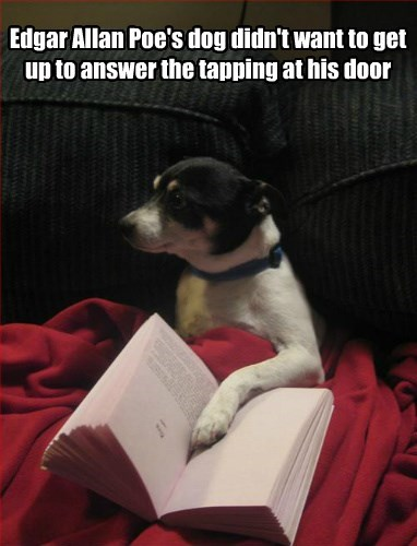 door,dogs,edgar allen poe,the raven,caption,tapping