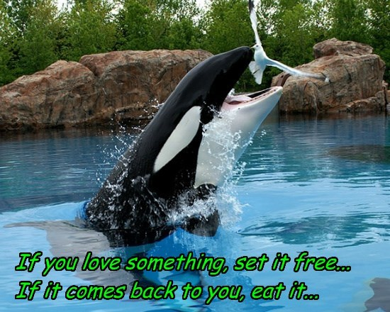 birds,killer whale,funny,animals