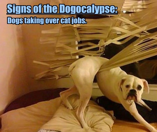 cat dogs over jobs apocalypse taking caption - 8577964544