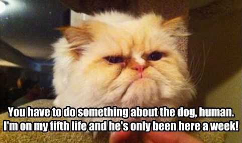You have to do something about the dog, human. I'm on my fifth life and he's only been here a week!