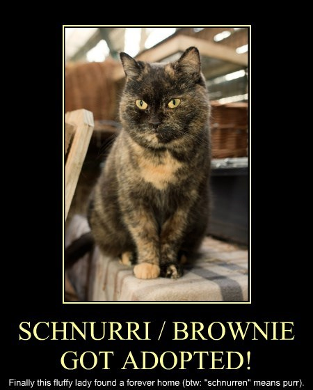 SCHNURRI / BROWNIE GOT ADOPTED!