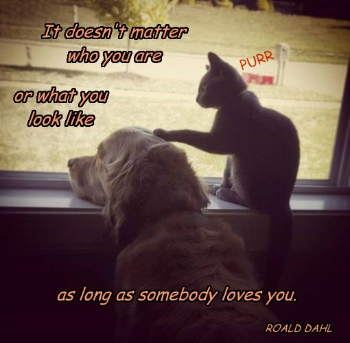 It doesn't matter who you are or what you look like as long as somebody loves you. PURR ROALD DAHL