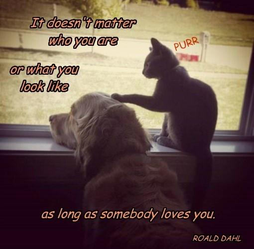 caption you cat loves somebody - 8578018048