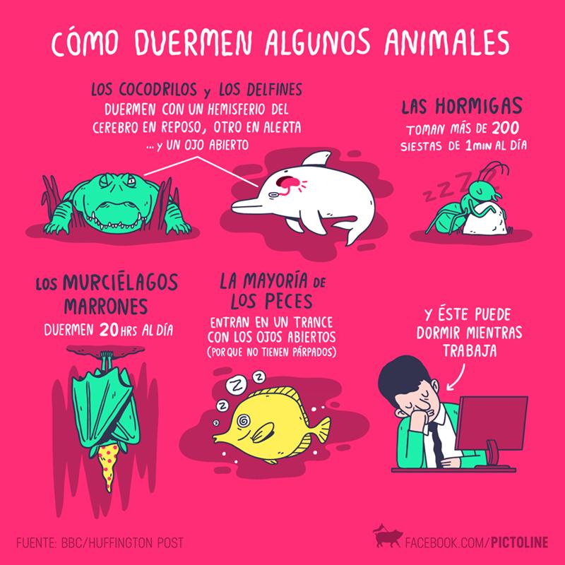 como duermen los animales
