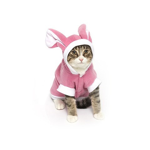 cats costumes halloween I Carrot Believe You've Done This To Me