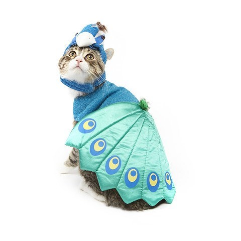 cats halloween costume I Think This Costume is Fowl