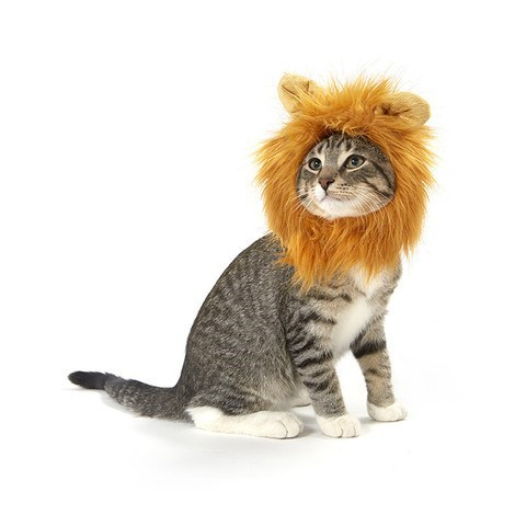 cats costumes halloween I'd Be Lion if I Said I Wasn't Thinking of Scratching You Right Now