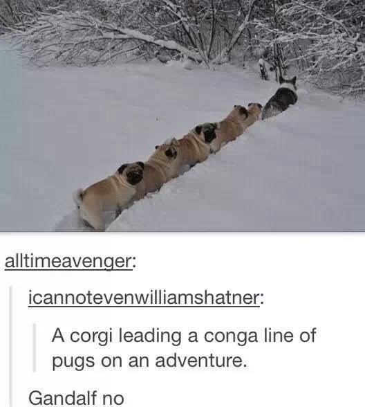 dogs funny lord of the rings You're In for a Difficult Journey