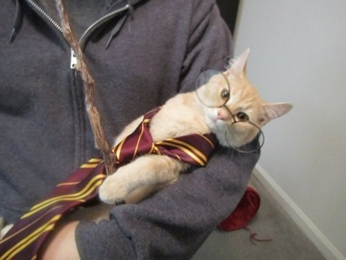 cute cats costumes Your a Wizard Hairy Potter