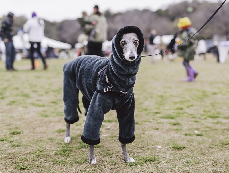 cute dogs image Fall Fashion at It's Finest